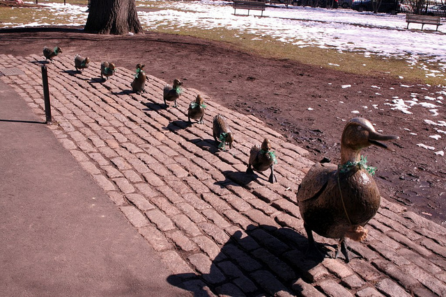 Estate Planning - Get your ducks in a row
